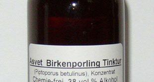 Birkenporling Tinktur herstellen